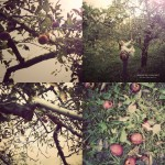 applepicking01